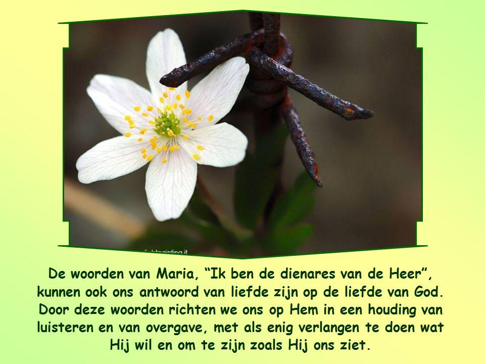 De woorden van Maria, Ik ben de dienares van de Heer , kunnen ook ons antwoord van liefde zijn op de liefde van God.