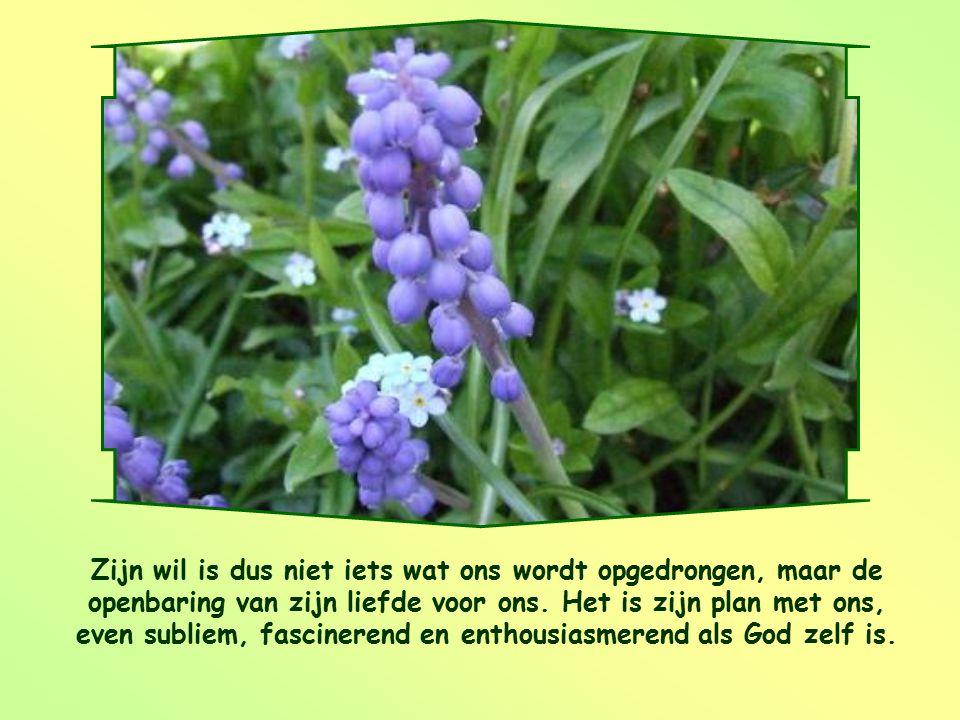 Zijn wil is dus niet iets wat ons wordt opgedrongen, maar de openbaring van zijn liefde voor ons.
