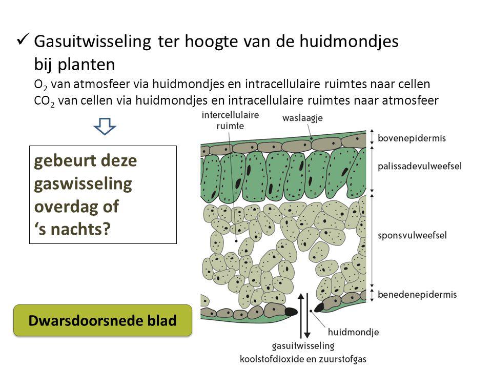 Gasuitwisseling ter hoogte van de huidmondjes bij planten