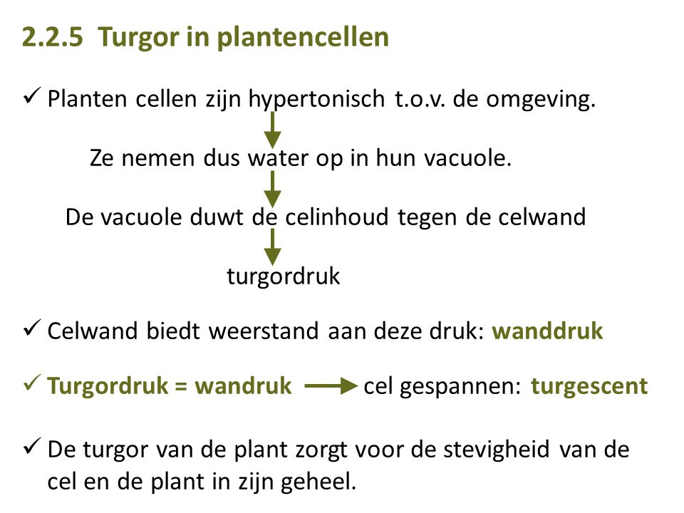 2.2.5 Turgor in plantencellen