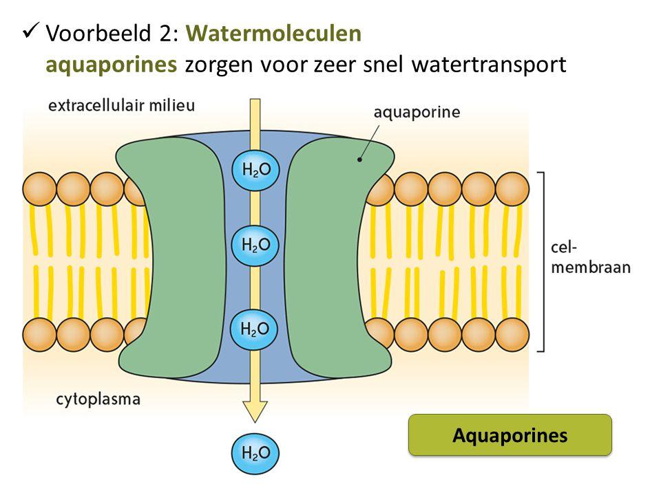 Voorbeeld 2: Watermoleculen