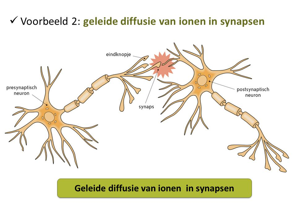 Geleide diffusie van ionen in synapsen