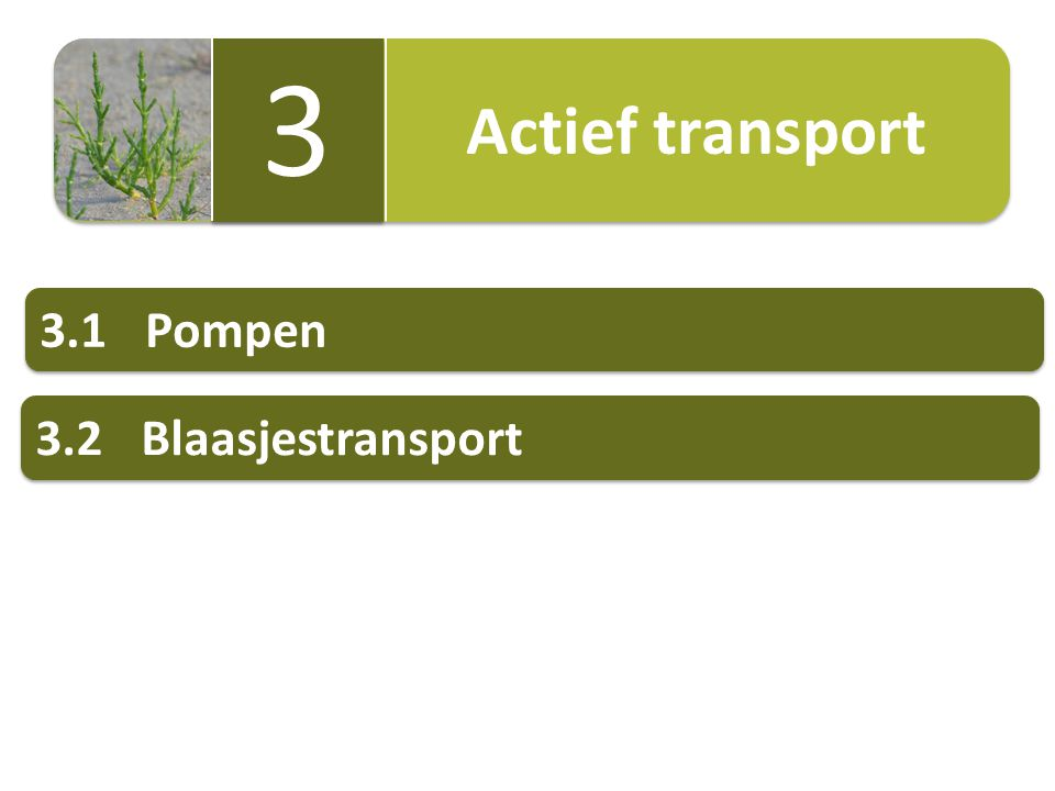 Actief transport 3 3.1 Pompen 3.2 Blaasjestransport