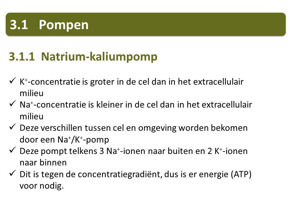 3.1 Pompen 3.1.1 Natrium-kaliumpomp