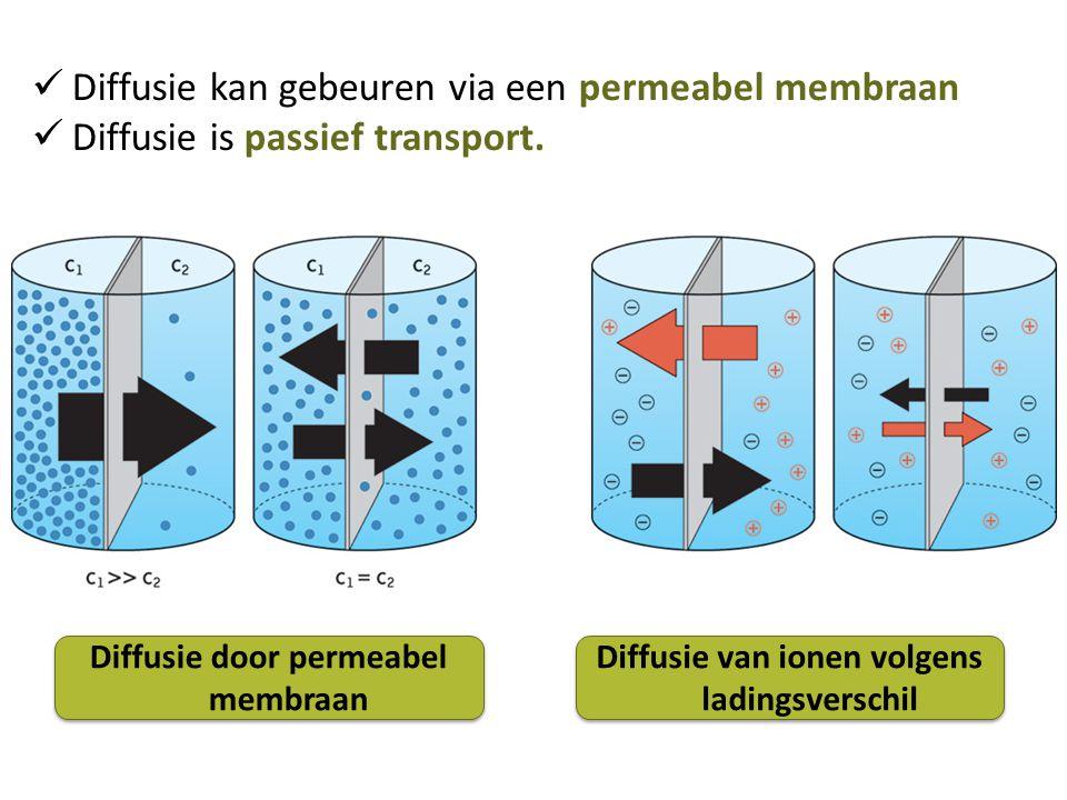 Diffusie kan gebeuren via een permeabel membraan