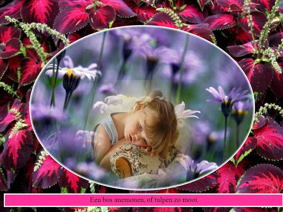 Een bos anemonen, of tulpen zo mooi.