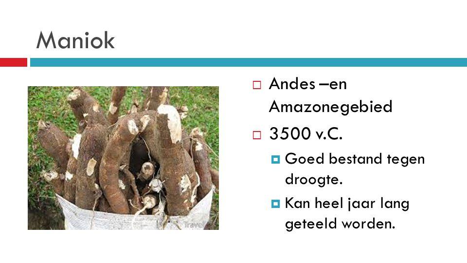 Maniok Andes –en Amazonegebied 3500 v.C. Goed bestand tegen droogte.