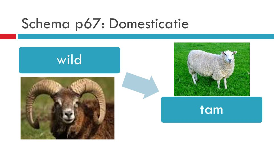Schema p67: Domesticatie