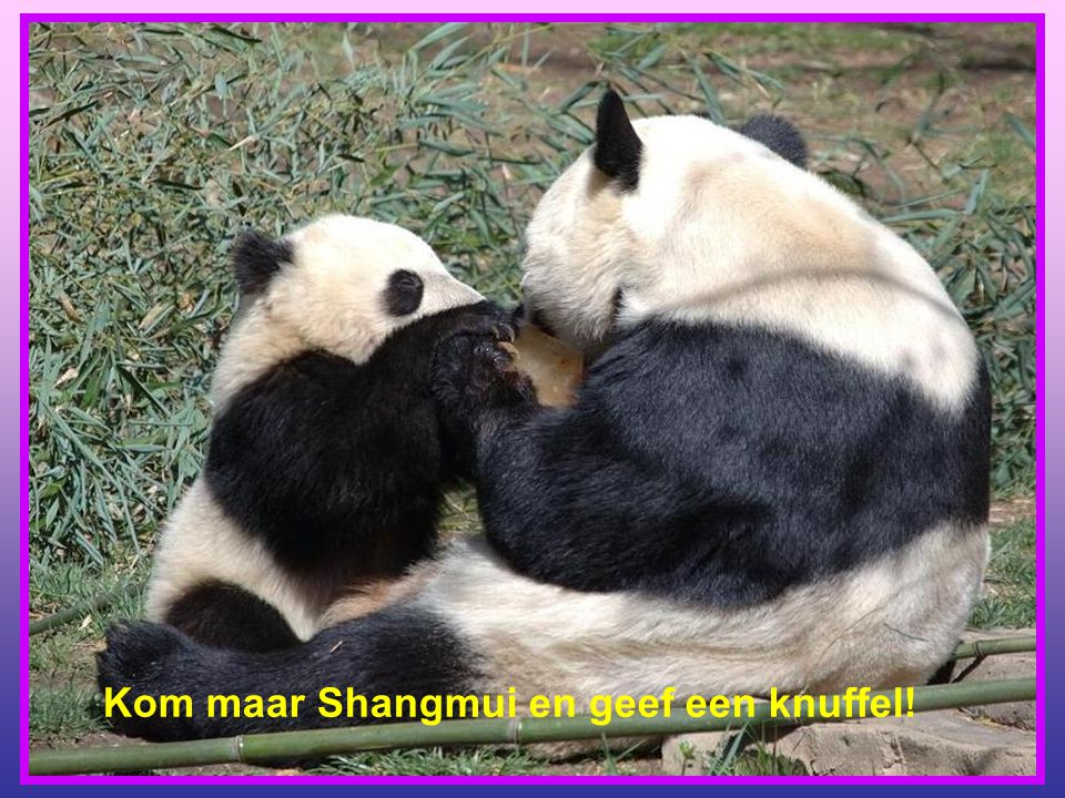 Kom maar Shangmui en geef een knuffel!