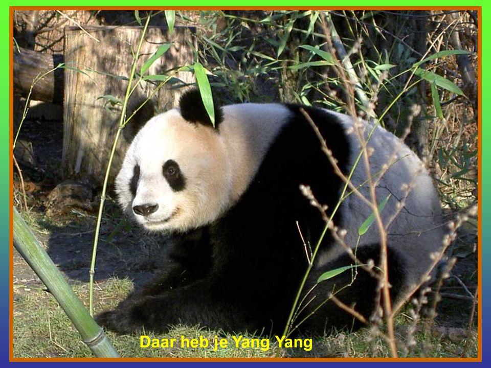Daar heb je Yang Yang