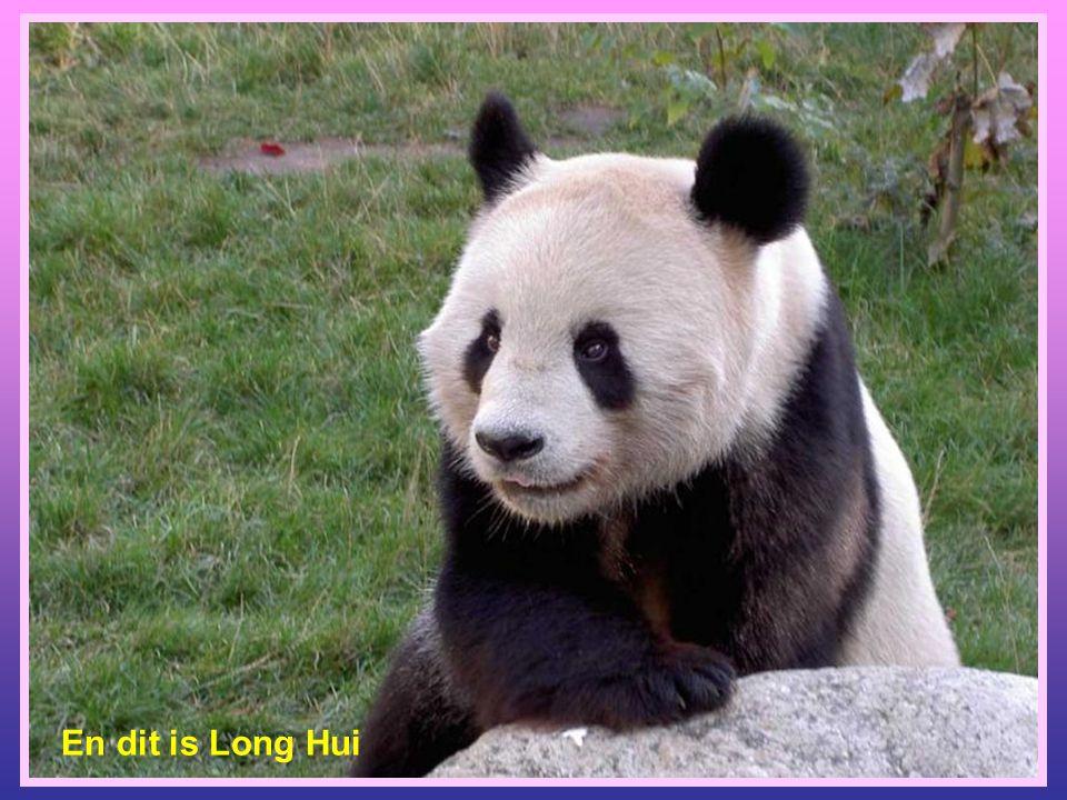 En dit is Long Hui