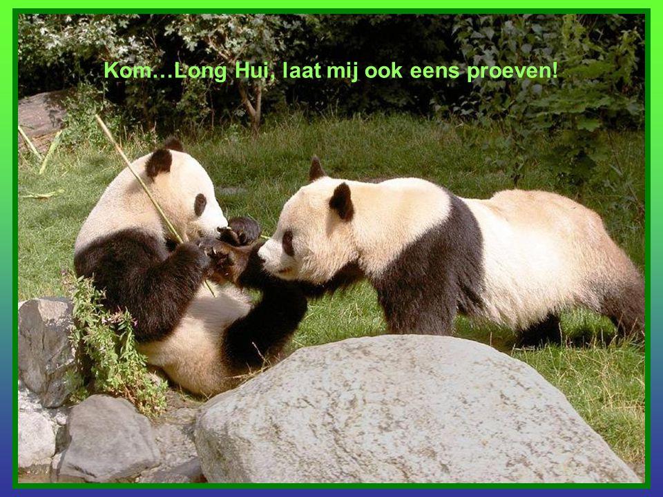 Kom…Long Hui, laat mij ook eens proeven!