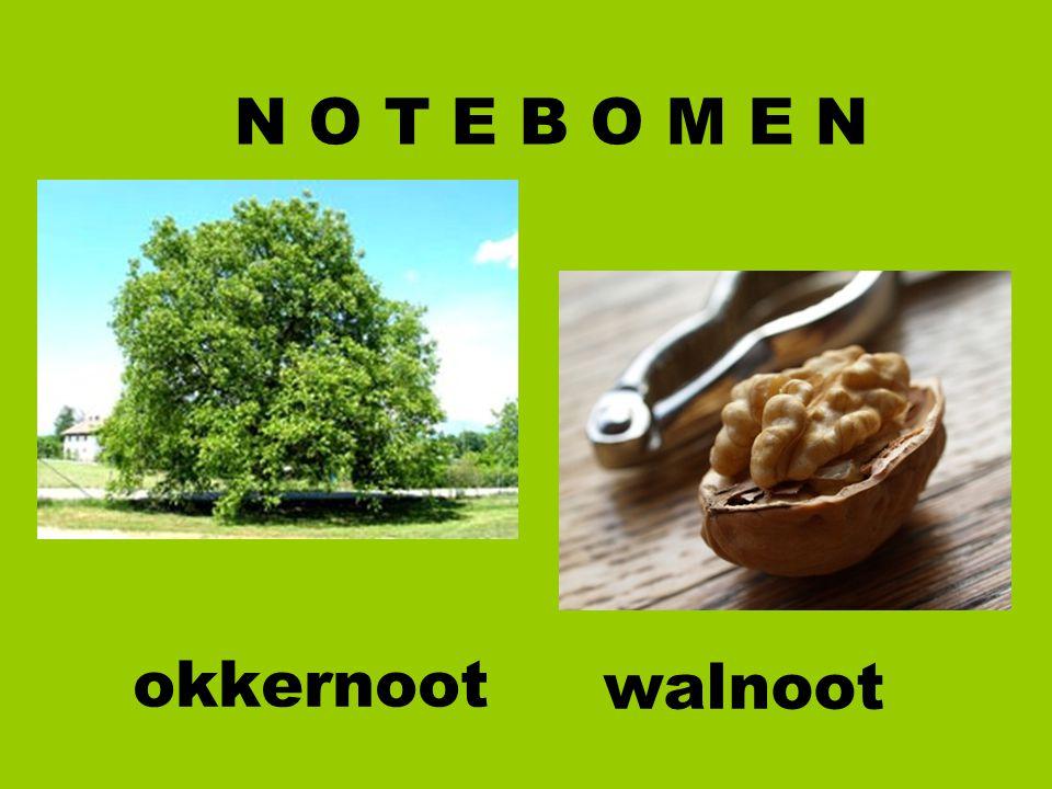 N O T E B O M E N okkernoot walnoot