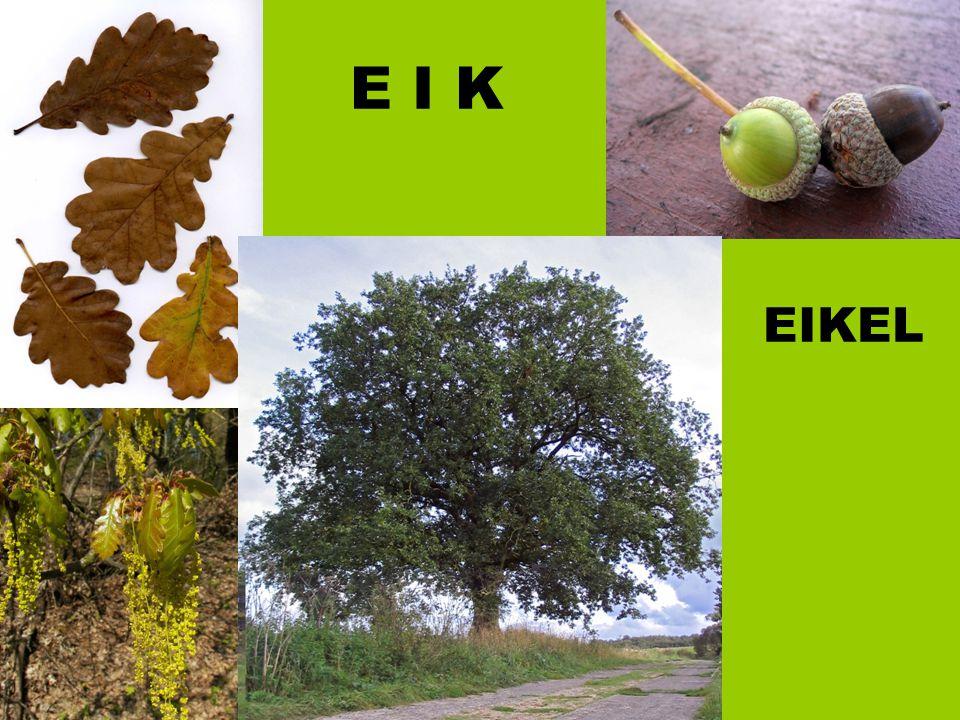 E I K EIKEL