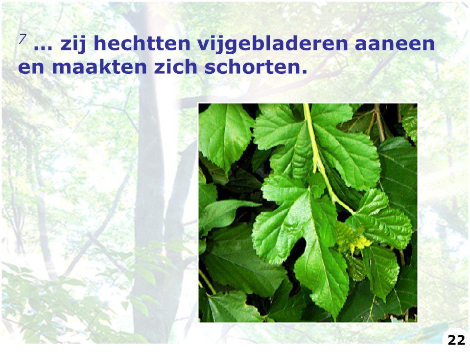 7 … zij hechtten vijgebladeren aaneen en maakten zich schorten.
