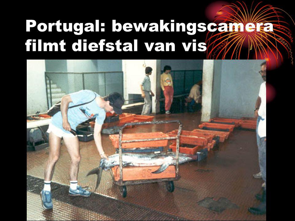 Portugal: bewakingscamera filmt diefstal van vis