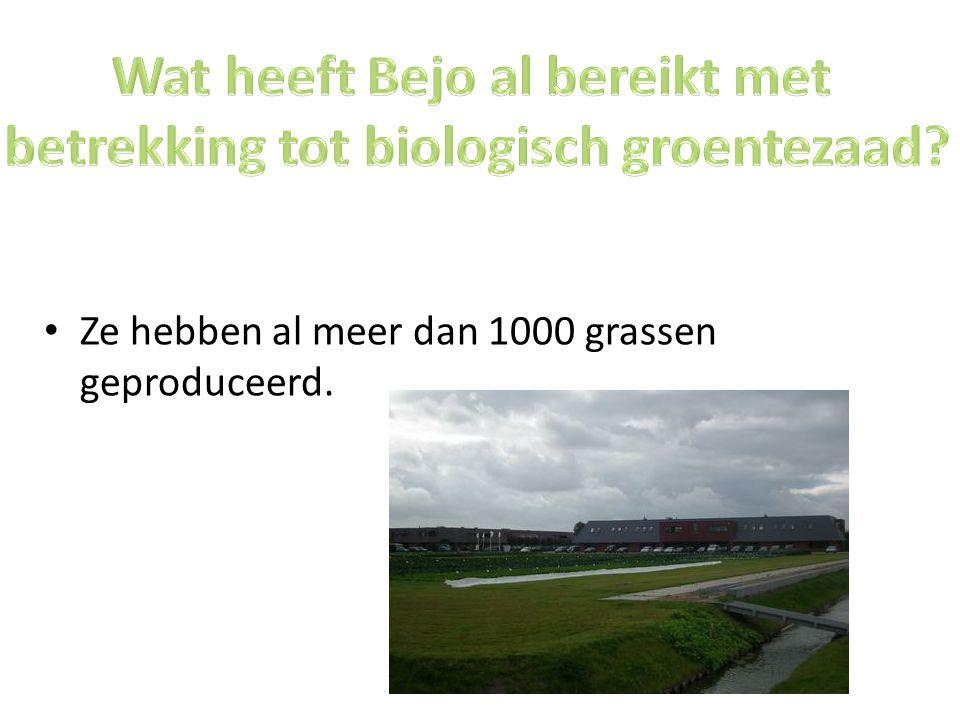 Wat heeft Bejo al bereikt met betrekking tot biologisch groentezaad