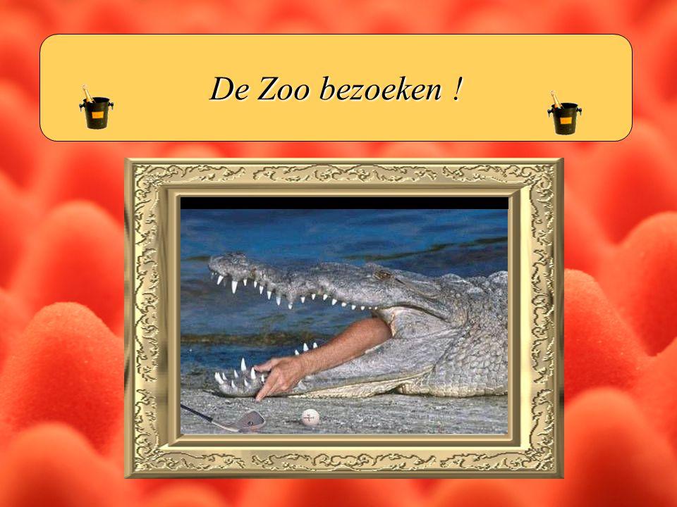 De Zoo bezoeken !