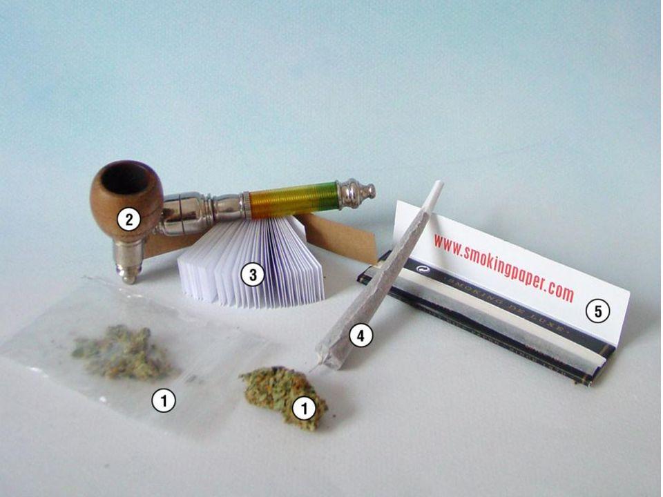 Cannabis cannabis