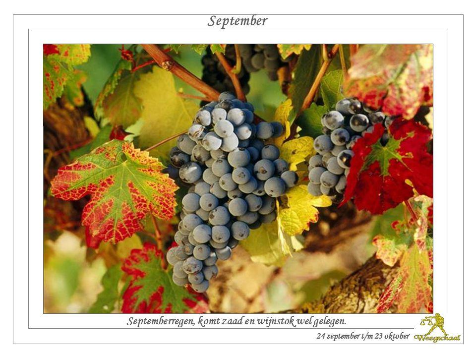 Septemberregen, komt zaad en wijnstok wel gelegen.