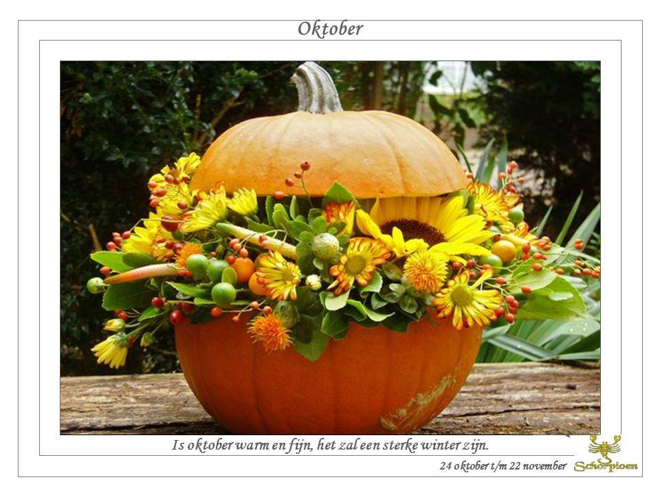 Is oktober warm en fijn, het zal een sterke winter zijn.