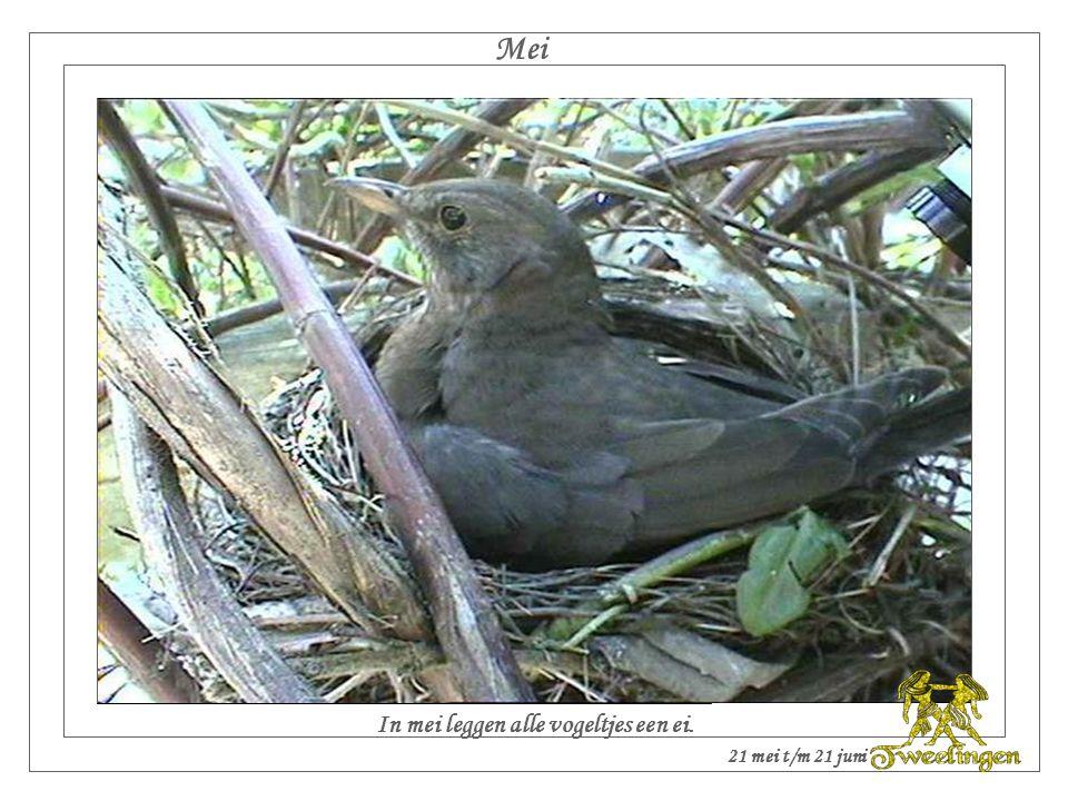 Mei In mei leggen alle vogeltjes een ei. 21 mei t/m 21 juni
