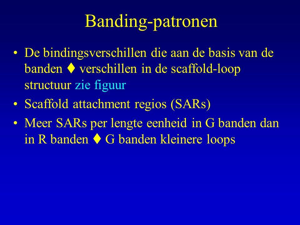 Banding-patronen De bindingsverschillen die aan de basis van de banden  verschillen in de scaffold-loop structuur zie figuur.