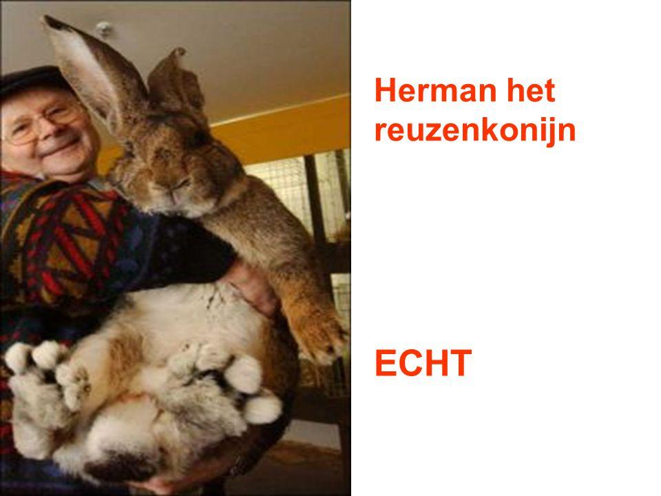 Herman het reuzenkonijn