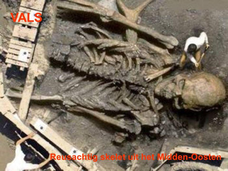 VALS Reusachtig skelet uit het Midden-Oosten