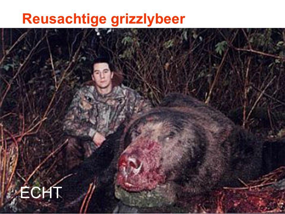 Reusachtige grizzlybeer