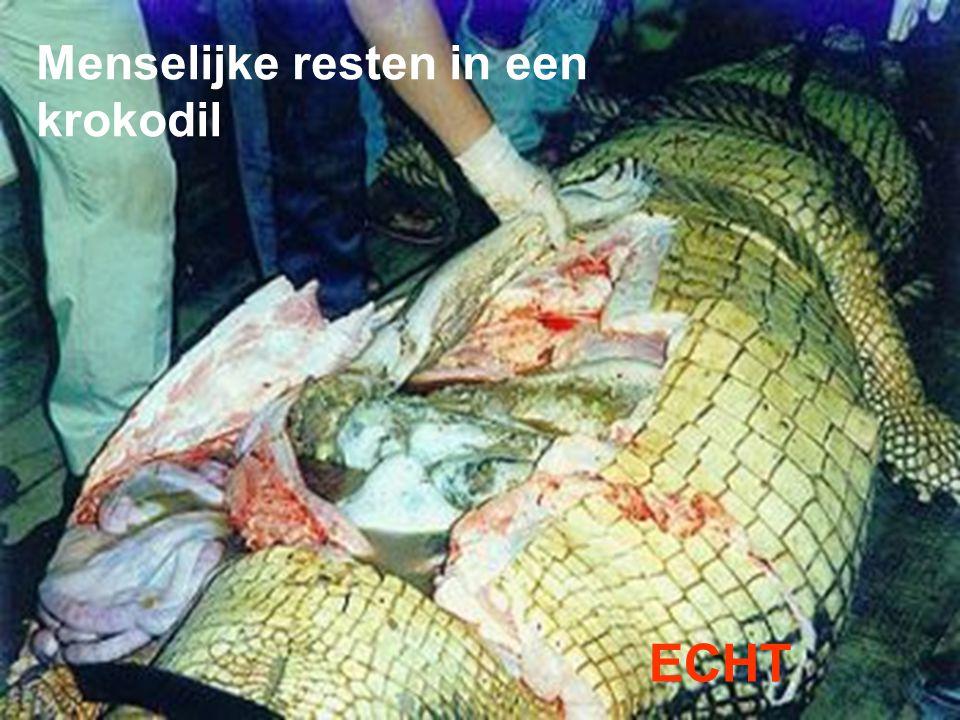 Menselijke resten in een krokodil