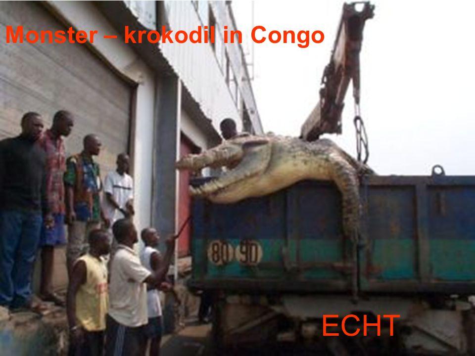 Monster – krokodil in Congo