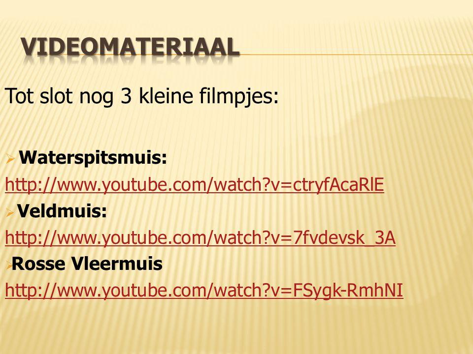 Videomateriaal Tot slot nog 3 kleine filmpjes: Waterspitsmuis: