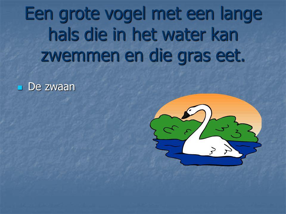 Een grote vogel met een lange hals die in het water kan zwemmen en die gras eet.