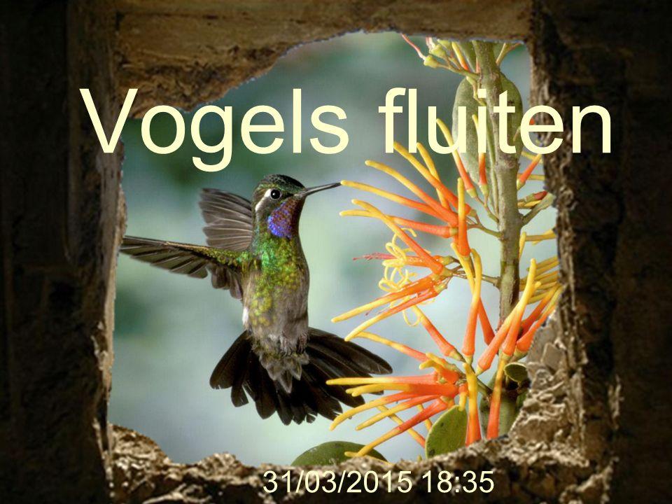 Vogels fluiten 9/04/2017 9:56