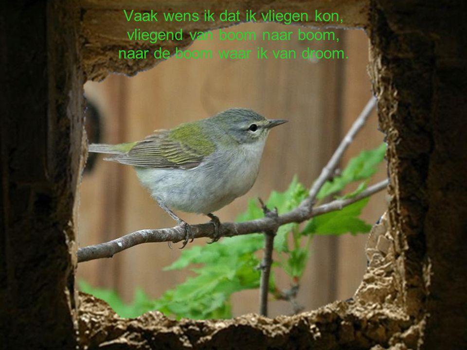 Vaak wens ik dat ik vliegen kon, vliegend van boom naar boom, naar de boom waar ik van droom.