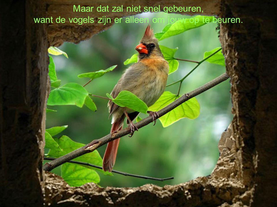 Maar dat zal niet snel gebeuren, want de vogels zijn er alleen om jouw op te beuren.
