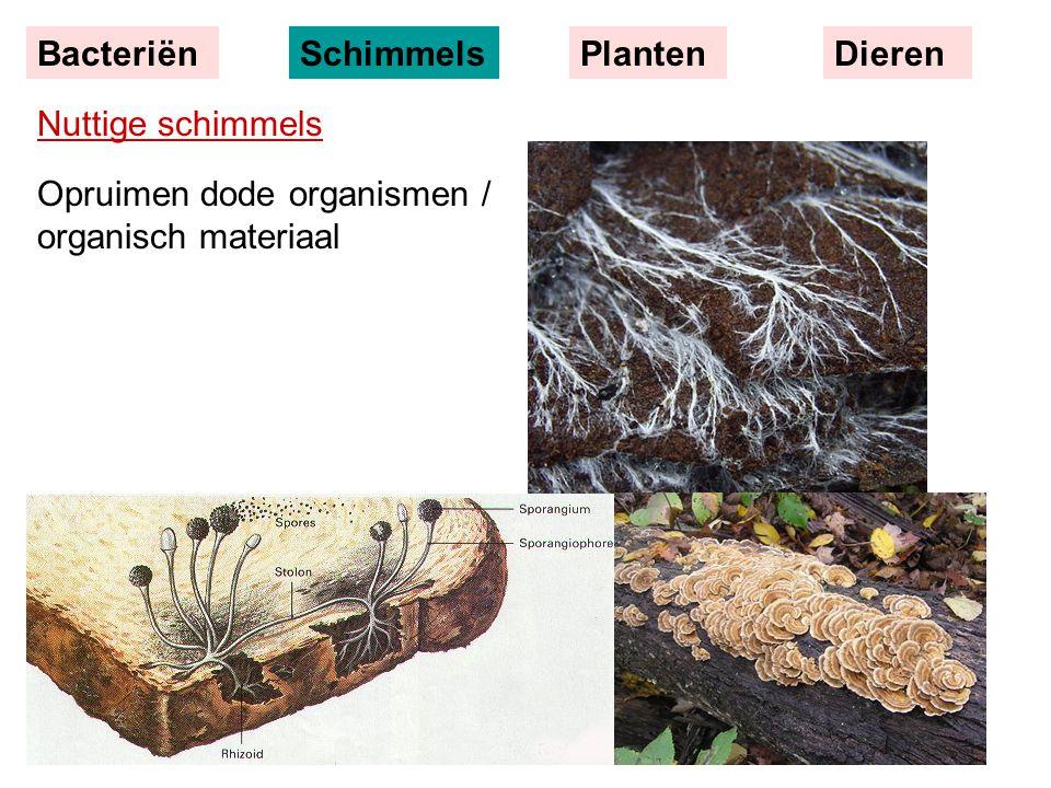 Bacteriën Schimmels Planten Dieren Nuttige schimmels Opruimen dode organismen / organisch materiaal
