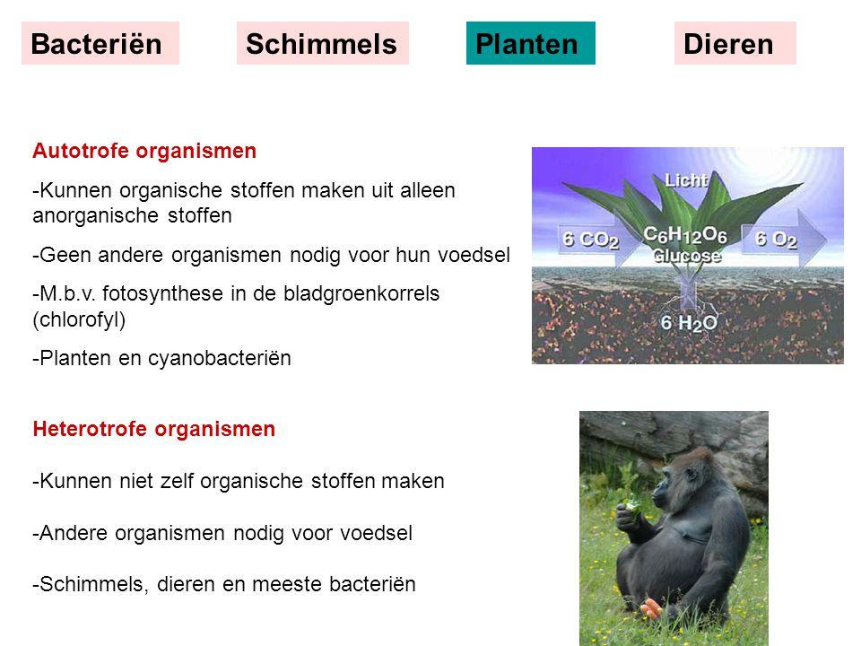 Bacteriën Schimmels Planten Dieren Autotrofe organismen
