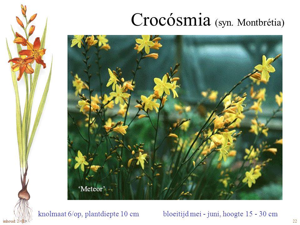 Crocósmia (syn. Montbrétia)