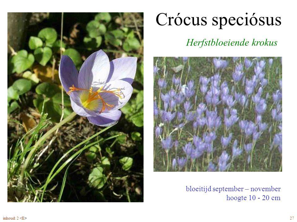 Crócus speciósus Herfstbloeiende krokus bloeitijd september – november