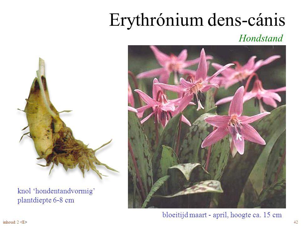 Erythrónium dens-cánis