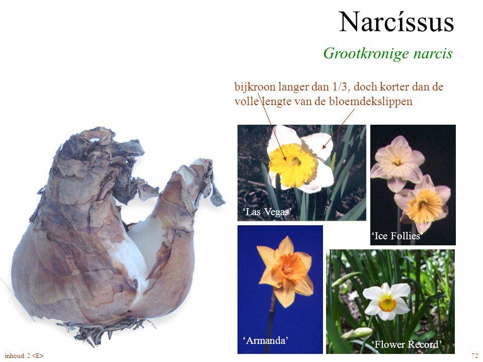 Narcíssus grootkronig