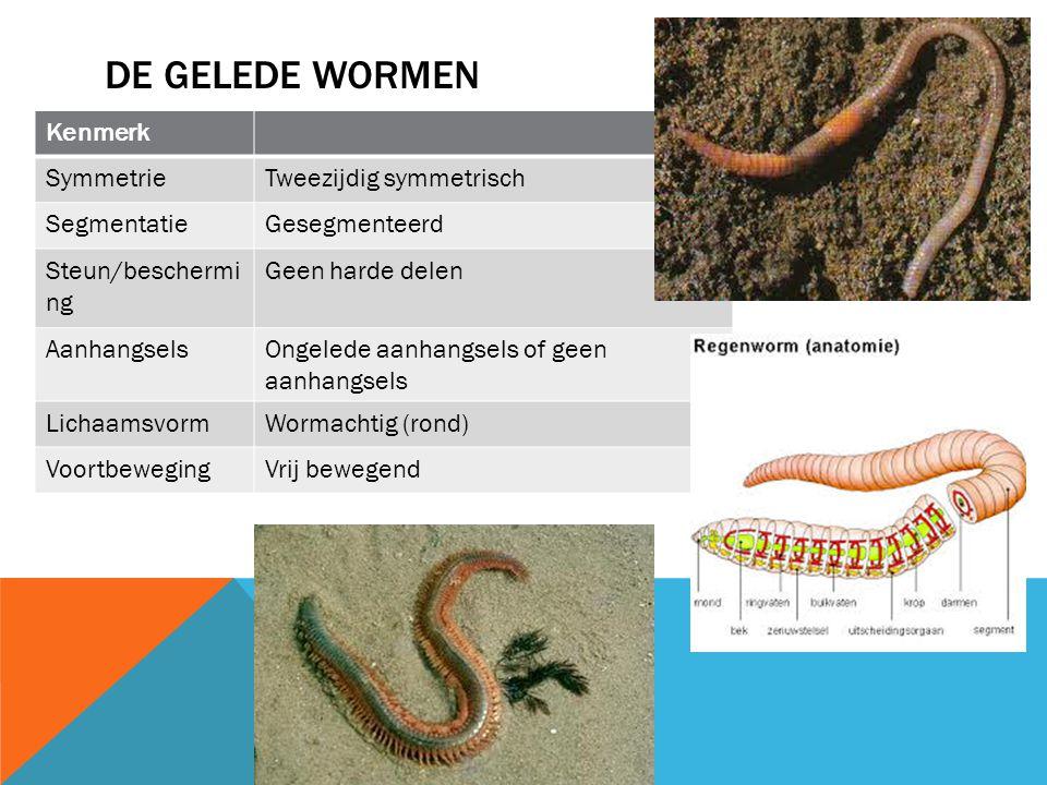 De gelede wormen Kenmerk Symmetrie Tweezijdig symmetrisch Segmentatie