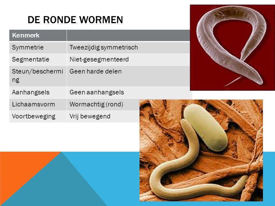 De ronde wormen Kenmerk Symmetrie Tweezijdig symmetrisch Segmentatie
