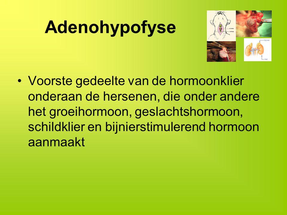 Adenohypofyse