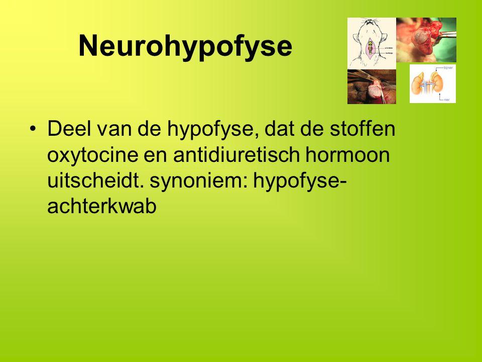 Neurohypofyse Deel van de hypofyse, dat de stoffen oxytocine en antidiuretisch hormoon uitscheidt.