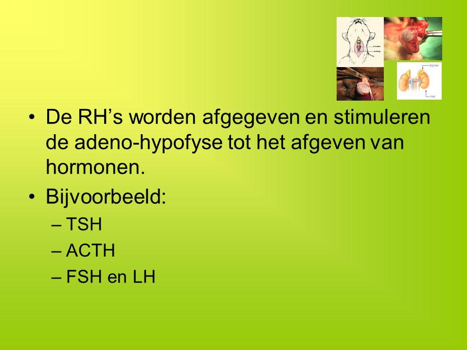 De RH's worden afgegeven en stimuleren de adeno-hypofyse tot het afgeven van hormonen.