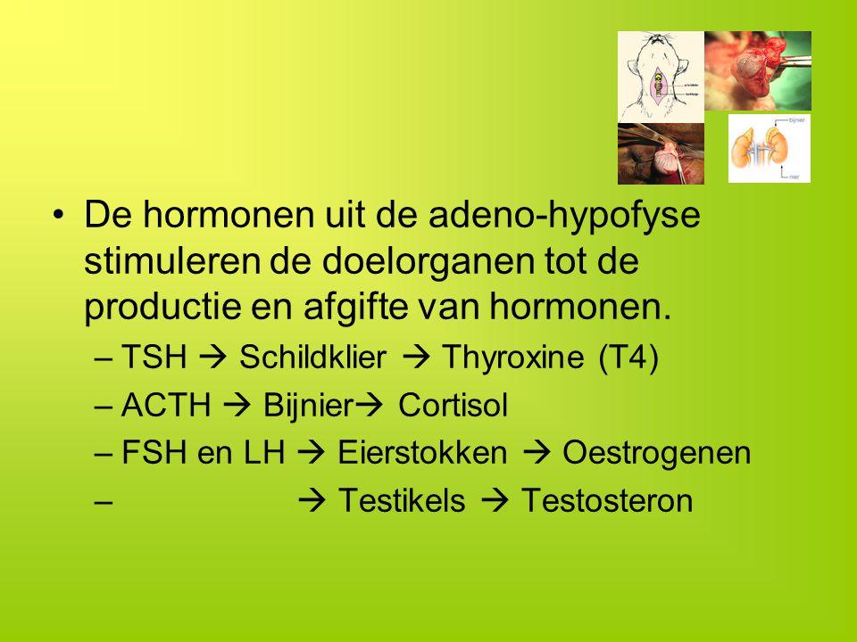 De hormonen uit de adeno-hypofyse stimuleren de doelorganen tot de productie en afgifte van hormonen.