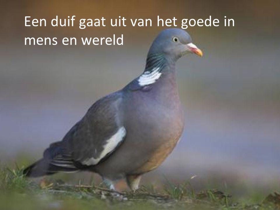 Een duif gaat uit van het goede in mens en wereld